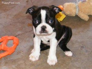PuppyFind.com,691796