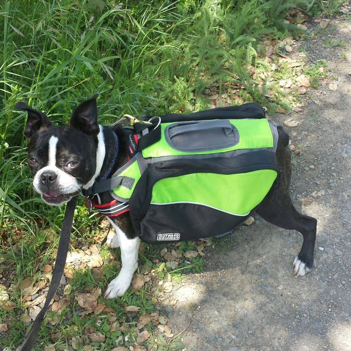 Will My Dog Get Ticks On A Hike